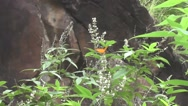 Butterfly on White Flowers Nature Footage Stock Footage