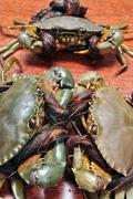 Crab from the Mekong delta on a confrontation Stock Photos
