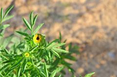 Green bud in the sun Stock Photos