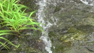 River Flowing Green Grass Clear Water Over Green Rocks Stock Footage