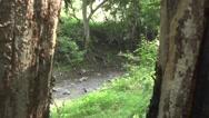 River flow Look Between Trees Stock Footage
