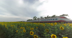 High Speed train is passing over a Field of Sunflowers Stock Footage