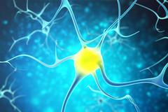 Neurons in the human nervous system with the effect of depth field. 3d rendering Stock Illustration