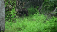 Elephant in the wild Country Of Thailand Stock Footage