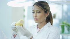 4K Food science researcher working in laboratory examining a corn cob Arkistovideo