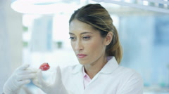 4K Scientific researcher in laboratory analyzing strawberry Stock Footage