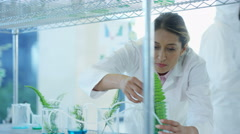 4K Scientific research team working in laboratory Stock Footage
