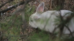 White rabbit in a summer forest Stock Footage