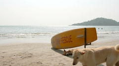 Dog sleeping under Surf Rescue surfboard Stock Footage