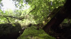 Log covered with moss. Somewhere in the deep woods Stock Footage