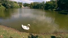 White swan at lake blue water Stock Footage