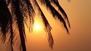Palm Trees Silhouette At Sunset Stock Footage