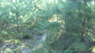 Walk through the forest with small pine trees Stock Footage