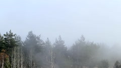 Fog in the forest. Taymlaps. Stock Footage