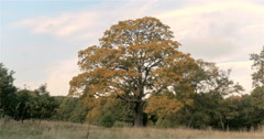 English Woodland: Autumn in Epping Forest; video pan Stock Footage