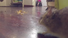 Mouse Sneaking Around Kitchen Finding Crumbs On The Floor Stock Footage