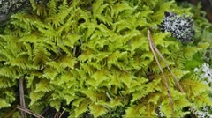 Moss and lichen on a tree stump - macro Stock Footage