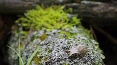 Moss and lichen on a tree stump - refocusing Stock Footage