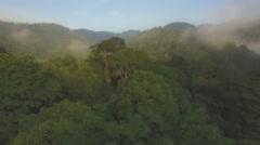 Flight over Rainforest Stock Footage