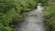 View of Small trout stream Stock Footage