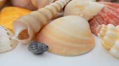 Sea shells isolated on white Stock Footage