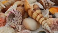 Shooting of cockleshells on a white background. Stock Footage