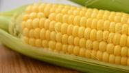 Corn, shooting of macro. Stock Footage