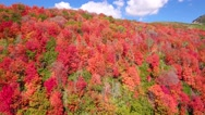 Aerial high shot of beautiful autumn colors in the mountain forest Stock Footage