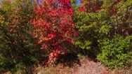 Aerial shot of beautiful autumn colors in forest Stock Footage