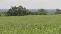 Summer field in the Catskill Mountains Stock Footage