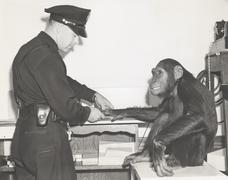 Monkey fingerprinted by police officer Stock Photos