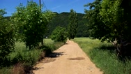 Pathway in nature with trees next to the field - steadicam move Stock Footage