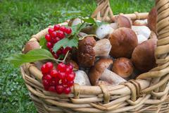 Noble white mushrooms in basket Stock Photos