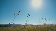 Grass field lit by bright sun Stock Footage