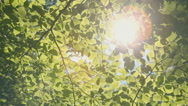 Morning sun in a forest Stock Footage