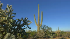 CLOSE UP: Big thorny cactuses growing in beautiful desert landscape Stock Footage
