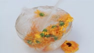 Healing marigold flowers in a glass water Stock Footage