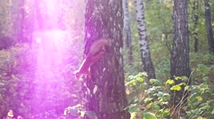 Mischievous squirrel jumps on a tree Stock Footage