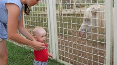 Cute kid at the zoo feeding grass pony with his mother. Horse with pleasure eats Stock Footage