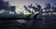Sillhouette of Longboard Surfboard Fins in Ocean Stock Footage