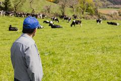 Man standing on green field while cattle in background Stock Photos