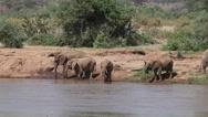 African Elephant, loxodonta africana, Group drinking at River, Samburu Park  Stock Footage