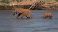 African Elephant, loxodonta africana, Adult and Calf crossing River, Samburu Stock Footage