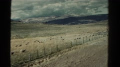 1967: drive through mountains and caw view COLORADO Stock Footage