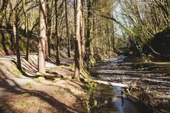 Stream flowing amidst trees in forest Stock Photos