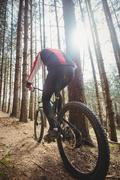 Rear view of mountain biker riding by trees in woodland Stock Photos