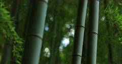 Fresh green at bamboo forest downtown Tokyo, Japan Stock Footage