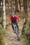 Mountain biker riding bicycle amidst tree in forest Stock Photos