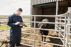 Farm worker writing in clipboard while examining cow at barn Stock Photos