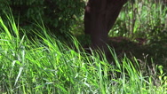 Long Grass in the Wind, Lorraine in East of France, Real Time Stock Footage